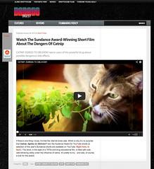 Badass Digest - Catnip: Egress to Oblivion?