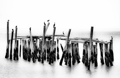 Birds on Poles, Provincetown, Cape Cod Black & White (Paul in Leeds) Tags: a900 alpha america american camera frame full sony slr state states united us usa water provincetown cape cod birds