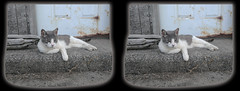 Cyber Chillin' 5 - Parallel 3D (DarkOnus) Tags: cat pennsylvania buckscounty huawei mate8 cell phone 3d stereogram stereography stereo darkonus closeup cyber feline chillin framed