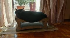 Kat Art by QFS_mlp (QueenFaeeStudio) Tags: catseyes black nero gatto blackcats gioco game fun havingfun magic cats felini gatti mici katze gatos blackcat samsung