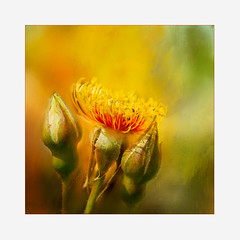 Flames of autumn (BirgittaSjostedt) Tags: flower rose bud flame autumn color redyellow light frame photoborder texture paint magicunicornverybest plant serene ie