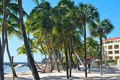 Key West (Florida) Trip 2015 DSC_0511Ri 4x6 (edgarandron - Busy!) Tags: florida keys floridakeys keywest higgsbeach casamarina