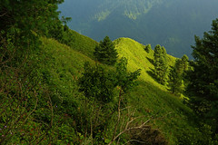 Miranjani: Sunshine on the ridge (Shahid Durrani) Tags: miranjani nathiagali hike