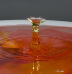 RDW_0321 (Rick Woehrle) Tags: rick woehrle waterart photography water droplets rickwoehrlephotography rickwoehrle waterdroplets