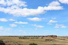 That big sky (view2share) Tags: bnsf bnsfrailway burlingtonnorthernsantafe fallon forsythsub easternmontana sky skyline bigsky siding sidetrack signals signal plains plain highplains greatplains coal coaltrain grain graintrain dpu deansauvola august202016 august2016 august 2016 rr railway railroad railroading railroads rail rails railroaders rring roadtrip train track transportation trains tracks transport trackage travel freight freighttrain freightcars summer clouds ge generalelectric locomotive power engine engineering