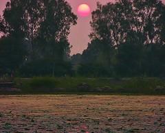 INDIEN, Khajuraho - See am frhen Abend, 14254/7123 (roba66) Tags: indienkhajuraho wasser water see lake teich madhya pradesh khajuraho indien indiennord asien asia india inde northernindia urlaub reisen travel explore voyages visit tourism roba66