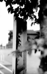B (side B) (Dinasty_Oomae) Tags: leica leicaiiia leica3a  iiia 3a   blackandwhite blackwhite monochrome bw outdoor   chiba  shadow  leaf