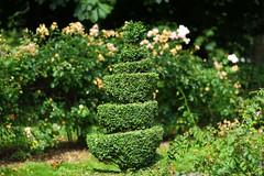 Almost 3D (Allan Jones Photographer) Tags: tree shrub bush twirl hedge greenery garden 3d 3deffect almost3d depthoffield allanjonesphotographer canon5d3 canonef70200mmf28lisusm