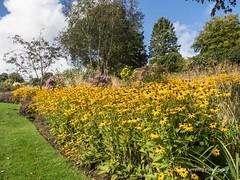 Clyne Gardens 2016 09 30 #23 (Gareth Lovering Photography 3,000,594 views.) Tags: clyne gardens botanical swansea wales flowers trees shrubs park olympus stylus1s garethloveringphotography
