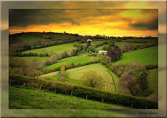 766. Did you ever see such perfectly manicured furrows (fleetingglances) Tags: trees nature wales perfect natureza cymru fields farmer furrows strolling manicured painstaking bewiahn