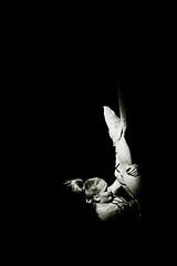 Cirque Micheletty (sergio.pereira.gonzalez) Tags: artist circo circus cirque artista artiste unejourneaucirque canon400d sergiopereiragonzalez cirquemicheletty httpfocale3fr