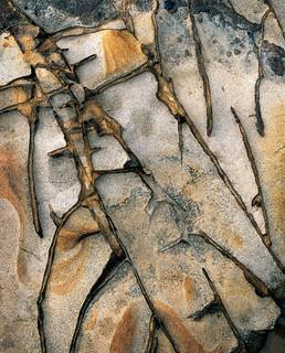 Howick sandstone ridges