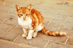 Redhead (Malia Len ) Tags: street orange cat canon calle little kitty redhead worldwide gato malia photowalk naranja canela pequeo suelo ayamonte callejero minino pelirojo gatio misino malialeon