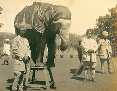 Elephant tricks (Abaraphobia) Tags: 1920s pakistan india cars boats photo sailing tour dam album military ships hunting rifles etiquette bombay temples tigers boating soldiers horseracing uniforms elephants horsedrawn yachts mahabaleshwar hyderabad mumbai karachi imperialism polo royalty pune sindh palaces raj 1925 colony yachting 1924 colonies carriages sukker karwar pomp grandeur twenties kolhapur britishempire riverindus pithhelmets kanara bhatghar jacobabad drig ganeshkhind khairpurstate