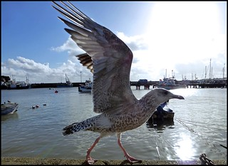 Seagull And Sunlight