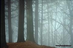 c01035-013D.tif - Bosque de alerces con niebla (Javier Juanes) Tags: españa mountain musgo forest montagne canal spain agua europa bosque otoño monte montaña sansebastian espagne senderismo vasco euskalherria izu paisvasco navarre donostia pais bois embalse haya goizueta navarra regata mendia cascada finca guipuzcoa gipuzkoa cav arantza basoa pagoa ibilbidea nafarroa erreka montañismo poblado hojarasca hayedo saintsebastien oiartzun ferreria donostiasansebastian lesaka artikutza oarsoaldea donostialdea otaran urtegia hegoalde bianditz aranzadi altzueta comunidadautonomavasca enobieta pagolleta izue gabinoarruebarrena javierjuanes wwwjuanesjaviernet marti000fotodestacada marti000 urdallue loizate arainburu mbaso000