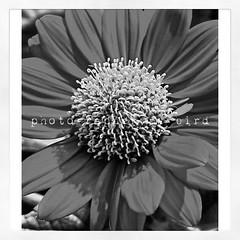 once of me my photograph ดอกไม้ยามเมื่อมันบานย่อมสวยงามและส่งกลิ่นหอมเย้ายวน..แต่ยามเมื่อมันเหี่ยวมันก็คงหมดความหมายและไร้ค่าไปในที่สุด!!เฉกเช่นมนุษย์หากได้เกิดมาแล้วไม่ทำความดีก็คงสู้ดอกไม้ไม่ได้เพราะอย่างน้อยดอกไม้ก็ยังให้กลิ่นที่หอมและรูปทรงที่สวยงาม..