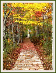 The Beautiful Boardwalk~EXPLORE #73 (clickclique) Tags: trees fall colors leaves hiking explore boardwalk beautifulcapture dalypoint theperfectphotographer travelpilgrems caminospaths