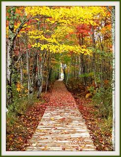 The Beautiful Boardwalk~EXPLORE #73
