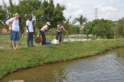 Fish farming in Kampala, Uganda. Photo by Jens Peter Tang Dalsgaard, 2012.
