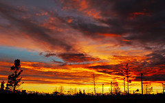 Fiery Evening (LostMyHeadache: Absolutely Free *) Tags: autumn trees sunset sky fall nature clouds canon fire evening twilight day cloudy silhouettes dramatic atmosphere fiery davidsmith calgaryalbertacanada eos60d
