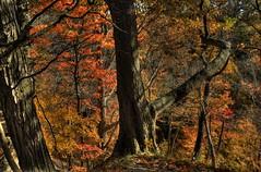 Autumn colours on the way to Decew Falls (angie_1964) Tags: autumn trees ontario color colour fall falls explore stcatharines decew nikon28300mm nikond800e