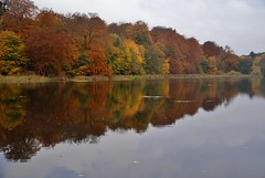 osto out for a walk (osto) Tags: autumn lake reflection water forest denmark mirror europa europe sony zealand dslr scandinavia danmark a300 sjlland  raadvad osto alpha300 osto october2012