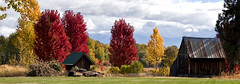 Autumn in Halfway (prwreden_98) Tags: autumn fall oregon or autumncolors allrightsreserved pinecreek copyrighted easternoregon bakercounty pinevalleyranch halfwayor philwreden powderrivercanyon prwreden halfwaymotel downtownhalfway prwreden98
