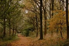 Autumn feelings....1 (J@N187) Tags: autumn holland tree colors dutch wonderful landscape herfst