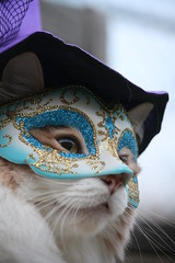 The Masked Kitty (karlaspence35) Tags: beauty hat cat kitty masked mojo publishing mfcc