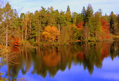 Tarn Hows autumn reflections (GillWilson) Tags: