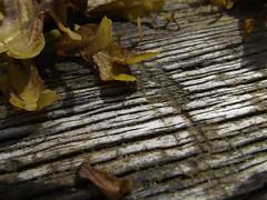 Seaweed (mattbarber1994) Tags: wood seaweed beach groin