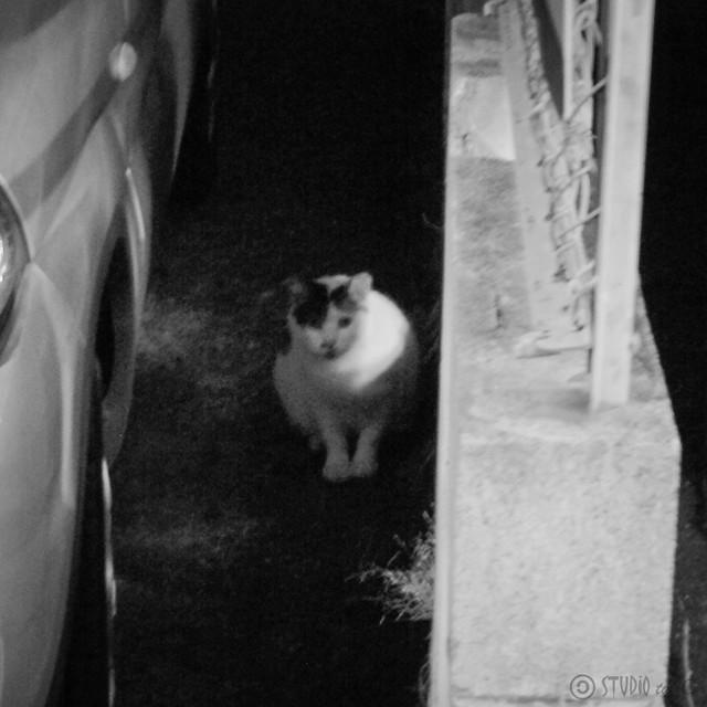 Today's Cat@2012-10-27
