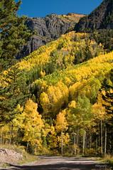 Colorado Fall Color. (Happy Photographer) Tags: autumn mountains colorado fallcolor aspen countryroad sanjuanmountains happyphotographer topphotospots tpslandscape