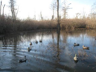 Arkansas Duck Hunting Lodge - Stuttgart 4