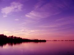 Lake Constance in Austria (Ssusanne) Tags: pink blue sky nature water colors clouds landscape austria see sterreich aqua wasser purple cloudy natur rosa himmel wolken blau ufer bodensee landschaft farbig farben bucht wolkig vorarlberg lakeconstance seeufer naturlandschaft rheindelta