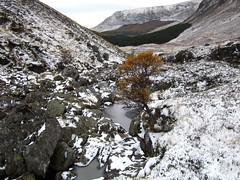 Whitewater with yellow tree (stuant63) Tags: autumn winter snow mountains tree ice yellow river scotland angus glen valley glendoll stuant63 stuartanthony