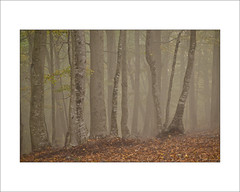 Boira-III (Toni de Ros) Tags: otoo niebla tardor fageda boira hayedo