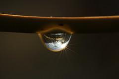 Droptics (gripspix (OFF)) Tags: nature natur drop tropfen abbildung refraktion 20121102