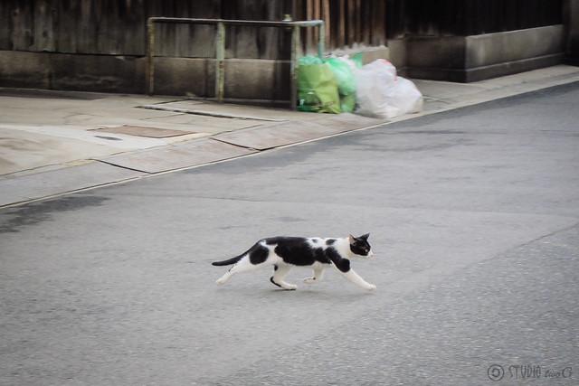 Today's Cat@2012-11-03