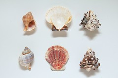 The not so little one spent forever sorting and playing with the shells (slightly everything) Tags: uk england 6 shells white nature beautiful creativity one europe collection patten katehiscock
