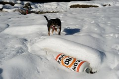 Sage (Thaddz) Tags: dog snow puppy northcascades entlebucher bakerlake entlebuchermountaindog