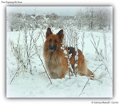 Injoying the Snow (Cat-Art) Tags: dog snow northernireland snowdog irishart catart irishphotographer catshatwell catrionashatwell imagesfromireland shatwellimages craigavoncitypark doublevisionimageswebscom