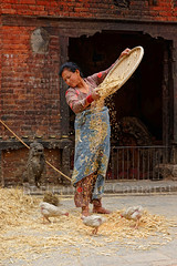 Paysanne, Bhaktapur (Bertrand de Camaret) Tags: asie asia nepal bhaktapur paysan paysanne riz rice poussin verticale bertranddecamaret nationalgeographic ngc tradition ville streetphotography