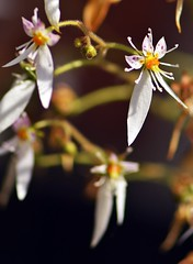 Summer 2016 LBG C118 (Lostash) Tags: nature life plants flora flowers gardens leicesterbotanicalgardens
