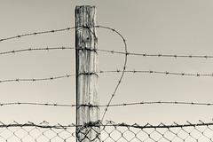 Barbed Wire 2 (pni) Tags: fence monochorme metal concrete sky pole wood barbed wire kalasatama fiskehamnen helsinki helsingfors finland suomi pekkanikrus skrubu pni
