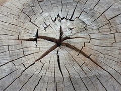 anelli spezzati (SergioBarbieri) Tags: anelli tronco olmo stella texture fratture olmocentenario garden star rings trunk tree