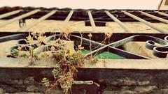 Tiempo pasado por el balcn (csmfoto15) Tags: navaluenga balcones balcn terraza antiguo pasado hierbajos suelo abandonado nikon nikond3300 d3300 desdeabajo perspectiva