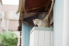 458    2016/6/25 (Natsuki_y) Tags: cats cat snap straycat canon eos1n film filmphotography kodak 85mm iso200 tokyo