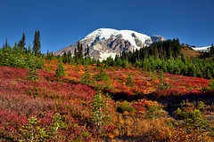 An Autumn Day in Mount Rainier National Park (thor_mark ) Tags: 14158feet 4315meters alpinemeadow blueskies canvas capturenx2edited cascaderange colorefexpro colors columbiacrest day4 evergreentrees evergreens forest gibraltarrock glacier glaciers hikingupthesideofmountrainier hillside hillsideoftrees lookingnnw mountrainier mountrainierarea mountrainiermassif mountrainiernationalpark mountains mountainsindistance mountainsoffindistance multiplecolors multitudeofplantleafcolors nature nikond800e nisquallyglacier pacificranges pointsuccess portfolio project365 skylinetrail smalltrees snowcapped southwashingtoncascades stratovolcano trailsaroundparadiseinn trees triptomountrainierandcolumbiarivergorge wa unitedstates
